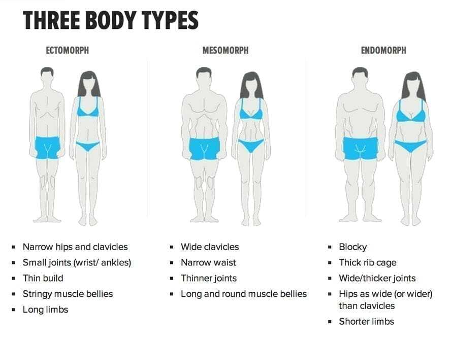 3 body sizes of ectomorph (smaller), mesomorph (medium), and endomorph (larger) to how genetics plays a large role in determining our body size