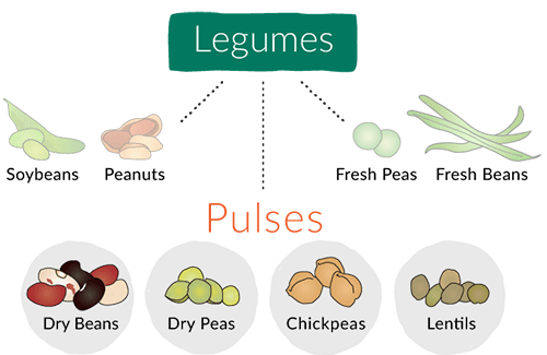 legume versus pulses difference